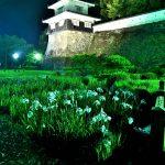 夜の大村城と花菖蒲