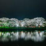 川面に映る夜桜