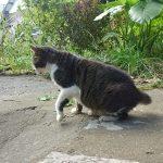 長崎まち猫1