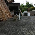 長崎まち猫白黒1