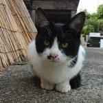 長崎まち猫白黒2