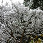 20180111時津久留里の雪の木