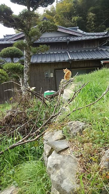 時津町左底郷で出会った猫。見返り美人のようです。