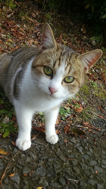 諌早市城見町で出会った猫ちゃん